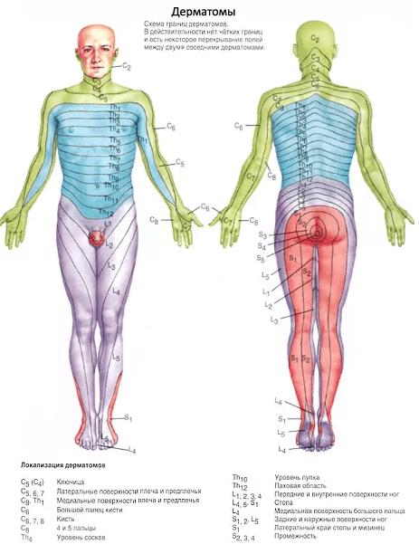 Боль в позвоночнике (боль в спине)