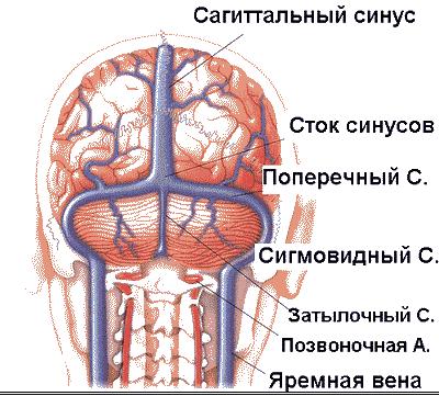 Что вызывает мигрень. Как снять приступ мигрени