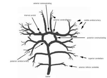 Особенности кровоснабжения головного мозга. Или почему возникает головокружение и шум в ушах? Лечение сосудистых заболеваний мозга